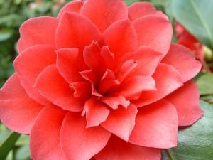 2002_0411_red flower